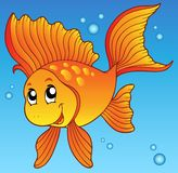 Cute goldfish in water Stock Photos