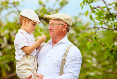 Cute grandpa with grandson on hands in spring garden Stock Photography