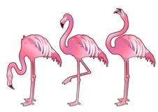 Cute graphic flamingo Stock Photos