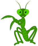 A cute grasshopper dance Royalty Free Stock Photo