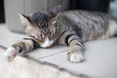 Cat sleeping on the floor royalty free stock image