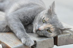 Cute gray cat Stock Photo
