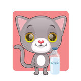 Cute gray cat with a bottle of milk Royalty Free Stock Photography