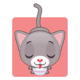 Cute gray cat drinking milk. Cute gray cat being happy and drinking milk Stock Image