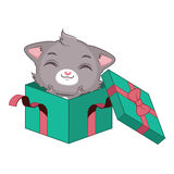 Cute gray cat in a green gift box Stock Image