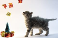 Cute gray cat looking to the falling presents from the air stock image