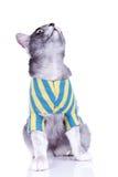 Cute gray cat looking up Stock Photos