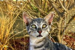 Cute gray cat looks at you Royalty Free Stock Photography