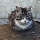 Cute gray cat. The cute gray cat sitting outdoors Stock Images