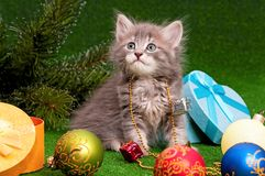 Cute gray kitten Stock Photography