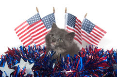 Cute gray kitten with American flags Royalty Free Stock Photos
