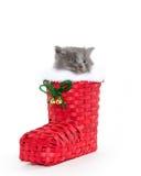 Cute gray kitten in boot Stock Photo