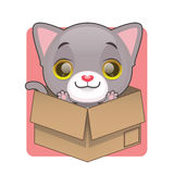 Cute gray kitten in cardboard box Stock Photo