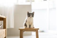 The cute gray kitten Stock Photos