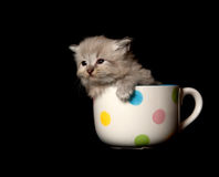 Cute gray kitten in cup Stock Images