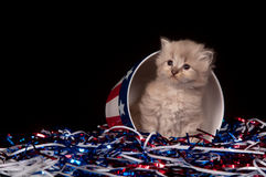 Cute gray kitten and Fourth of July decorations Stock Photo