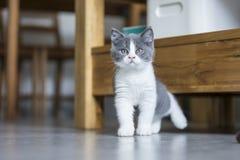 The cute gray kitten Stock Photo