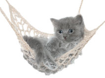 Cute gray kitten in hammock Stock Photos