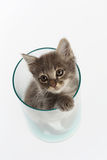 Cute gray kitten in a jar. Exciting Royalty Free Stock Photography