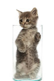 Cute gray kitten in a jar stock photos