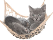 Cute gray kitten lay in hammock Stock Photo