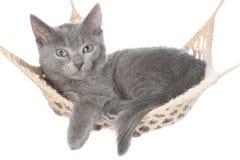 Cute gray kitten lay in hammock Royalty Free Stock Photography