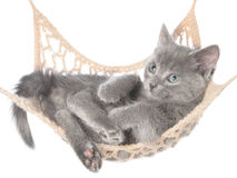Cute gray kitten lay in hammock Royalty Free Stock Photos