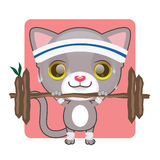 Cute gray kitten lifting heavy. Weights and sweating Royalty Free Stock Image
