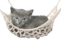 Cute gray kitten lying in hammock Royalty Free Stock Photos
