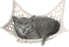 Cute gray kitten lying in hammock Stock Photos