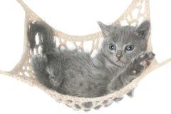 Cute gray kitten lying in hammock Royalty Free Stock Photos