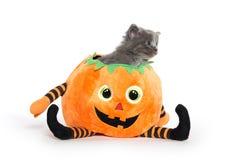 Cute gray kitten in pumpkin Royalty Free Stock Image