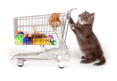 Cute gray kitten pushing shopping cart Royalty Free Stock Images