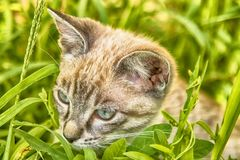 Cute gray kitten sitting in the garden royalty free stock photography