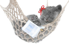 Cute gray kitten sleep in hammock with open book Stock Image