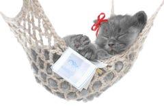 Cute gray kitten sleep in hammock with open book Stock Image