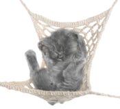 Cute gray kitten sleeping in hammock top view Stock Photo