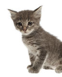 Cute gray kitten on white background. Close up Royalty Free Stock Photography