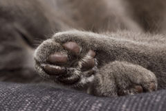 Cute gray paw Royalty Free Stock Images
