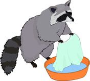 Cute raccoon washes clothes. Vector illustration. stock illustration