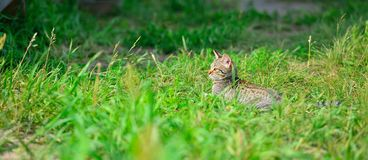 Cute gray tabby kitten on meadow Royalty Free Stock Images
