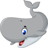 Cute gray whale cartoon posing. Illustration of cute gray whale cartoon posing Stock Image