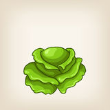 Cute green hand drawn cabbage Royalty Free Stock Photo