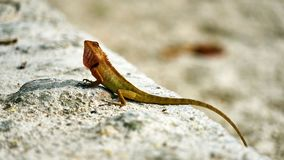 Cute green lizard sits on sand Stock Images