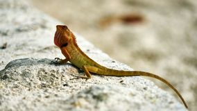 Cute green lizard sits on sand Royalty Free Stock Photos