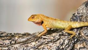 Cute green lizard sits on a tree stock photos