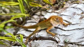 Cute green lizard sits on a tree royalty free stock photography