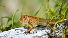 Cute green lizard sits on a tree royalty free stock image
