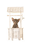 Cute grey baby siamese cat in a wishing well Royalty Free Stock Photography