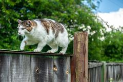 Cute and grey cat creeping up on dark grey old  fence, on green background under blue sky royalty free stock photography